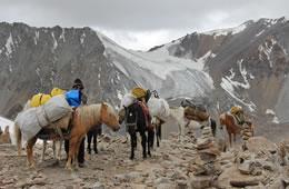 trekking in ladakh