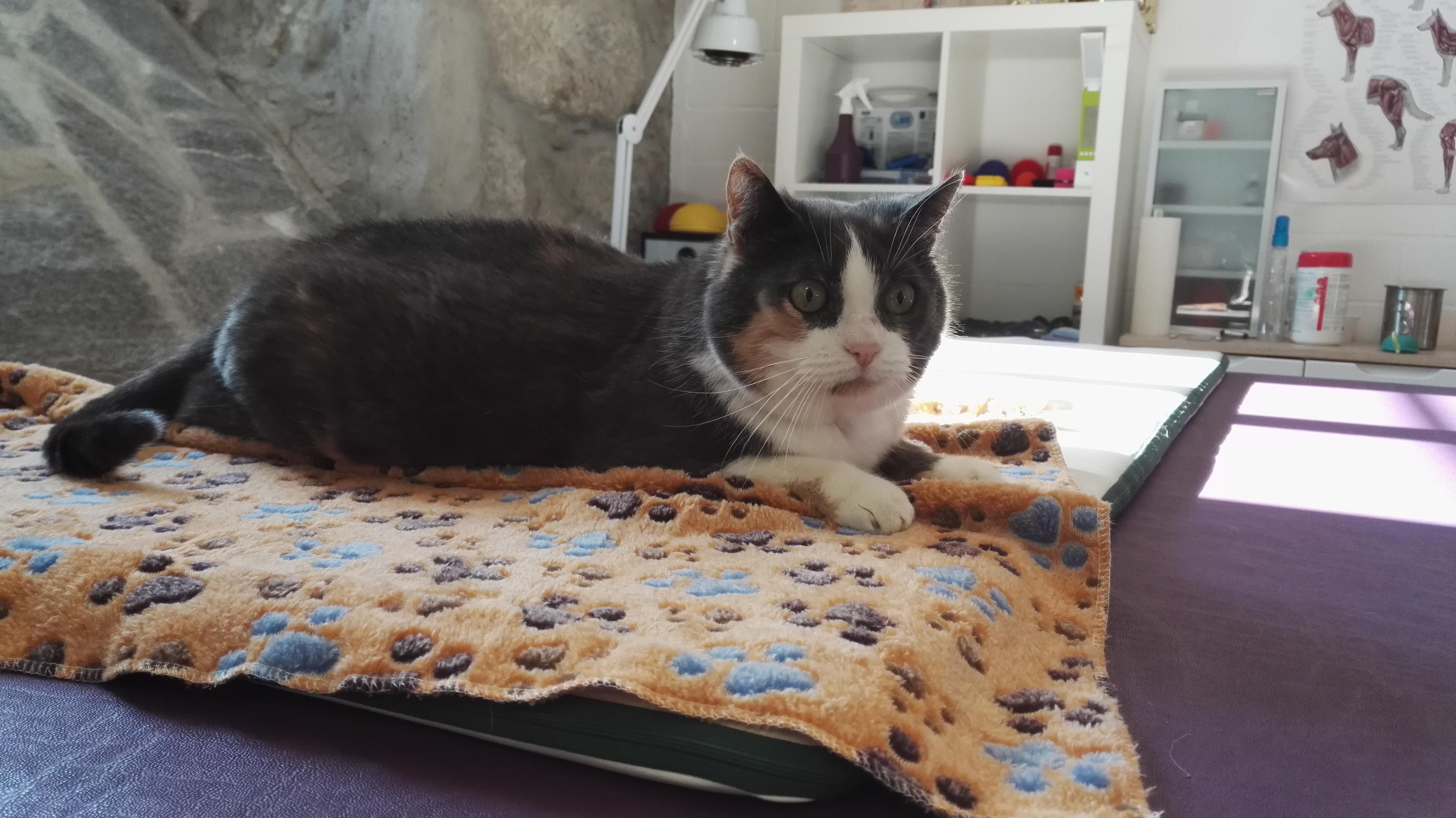 die Katzen schätzen eine Physiotherapiebehandlung genauso wie Hunde